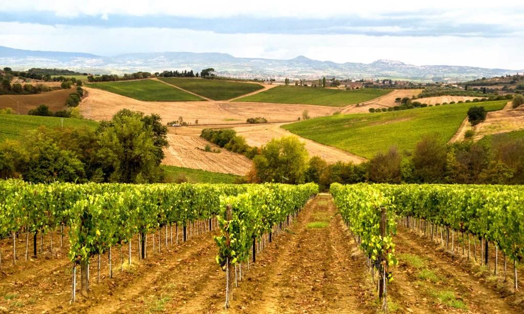 Tuscany, Italy vineyards